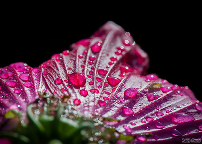 Rain Drops on a Flower